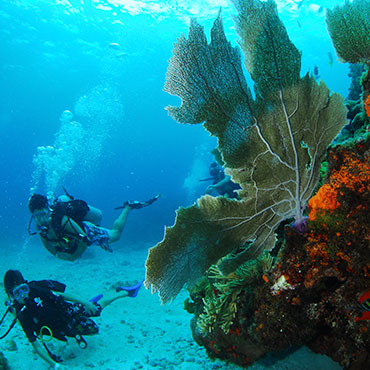 Experience Diving in Cancun divePro